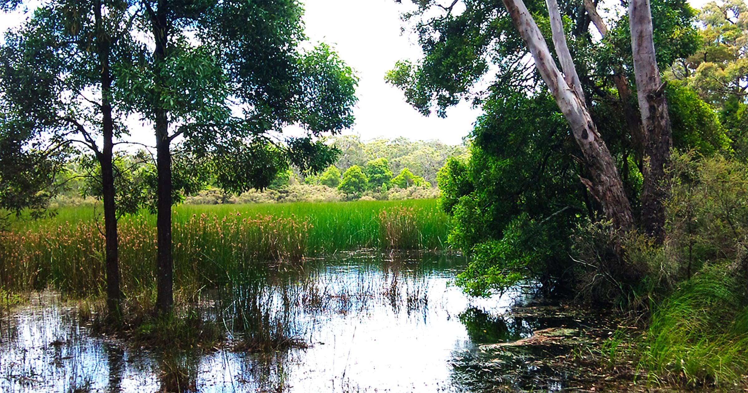 Myamyn Forest